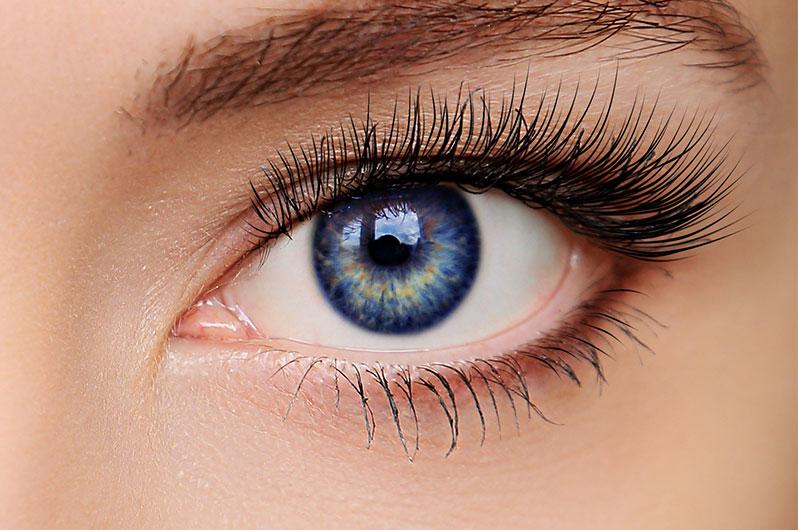 Salon G & Spa, Inc Eyelash Tinting Services